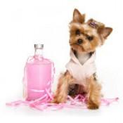 Περιποίηση & Καλλωπισμός Σκύλων